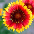 Bright Floral Day by Clayton Bruster
