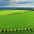 Bright Green Landscape With Fields And Trees by Matthias Hauser