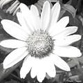 Bright In White by Lorraine Louwerse