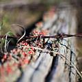Bright Lichen by Alex Blondeau