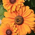 Bright Orange Flowers  by Carol Groenen