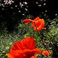 Bright Orange by Renate Nadi Wesley