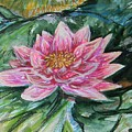 Bright Pink Waterlily by Emily Michaud