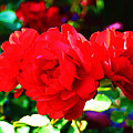 Bright Red Rose by Michael C Crane
