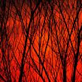 Bright Red Sunset by Kenneth Bourassa