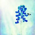 Bright Spring Day by Kim Henderson
