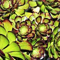 Bright Succulents by LKB Art and Photography