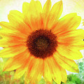 Bright Yellow Sunflower - Painted Summer Sunshine by Anita Pollak