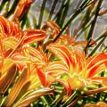 Brighten Your Life by Jeff Sebaugh