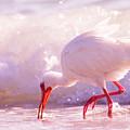 Brilliant Beauty Cortez Beach by Betsy Knapp