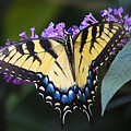 Brilliant Butterfly by Teresa Mucha