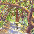 Briones Forest Near Springhill Road by Judith Kunzle