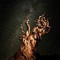 Bristlecone Nights by Stacie Rabe