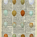 British Birds Eggs by Anna W