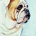 British Bulldog by Morgan Fitzsimons