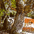 British Cementary Ocracoke Island Nc by Wayne Potrafka
