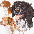 Brittany Spaniel by Barbara Keith