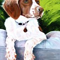 Brittany Spaniel by Susan A Becker