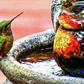 Broad-tailed Hummingbird At Water Fountain by Marilyn Burton