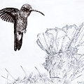 Broadbilled Hummingbird by Wade Clark