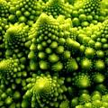 Broccoli by Dragica  Micki Fortuna