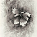 Broken Blossom by Rachel Christine Nowicki