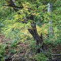 Broken Branches by Diane Moore