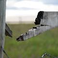 Broken Fence Stormy Skies by Lisa Knechtel