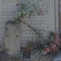 Broken Flowers by Eileen Marie Ardillo