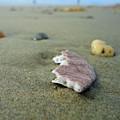 Broken Sand Dollar - Low Tide At Manhattan Beach by Trinket's  Legacy