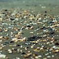 Broken Seashells by Chris Bordeleau