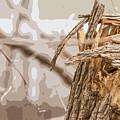 Broken Tree Base by Carl Therriault