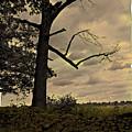 Broken Tree by Madeline Ellis