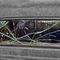 Broken Window Theory by Kyra Neeley