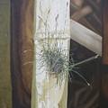 Bromeliad And Bamboo by Marianna Hoefle