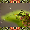 Bromeliad Grasshopper by Bell And Todd