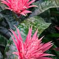 Bromeliad Plant 3 by Marcin Rogozinski
