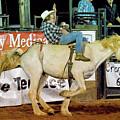 Bronc Riding by Glenn Matthews