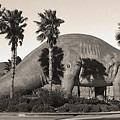 Brontosaurus In Sepia by Gregory Dyer