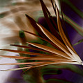 Bronze Ferns by Donna Bentley