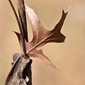 Bronzed Oak Leaf Vertical by Rowena Throckmorton