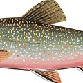 Brook Trout by American School