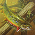 Brook Trout Cover by JQ Licensing