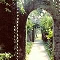 Brookgreen Gardens by Glenda Barrett