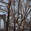 Brooklyn Bridge Thru The Trees by Rob Hans