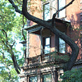 Brooklyn Building And Tree by Silvia Bruno