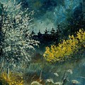 Brooms Shrubs by Pol Ledent