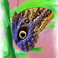Brown And Blue Butterfly 2 by Jim  Darnall