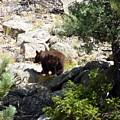 Brown Bear by George Tuffy