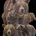 Brown Bears 8 by Larry Linton